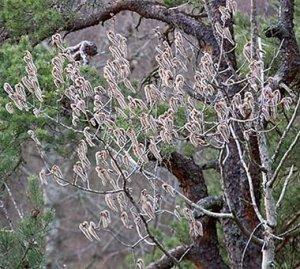 träd flottsbroskogen 070408c.jpg