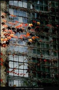 5203-lövklädda-fönster-50k.jpg