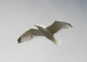 fågel_2.jpg