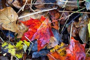 Autumn-leaves-3456_rgb_w.jpg